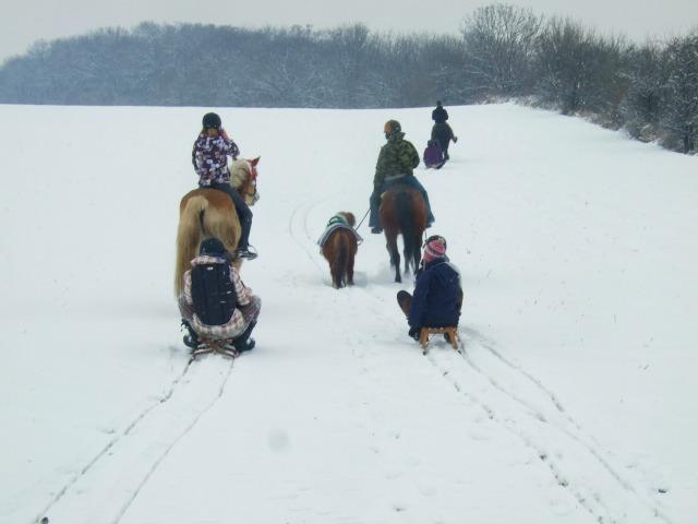 Schlittenfahren-Pony