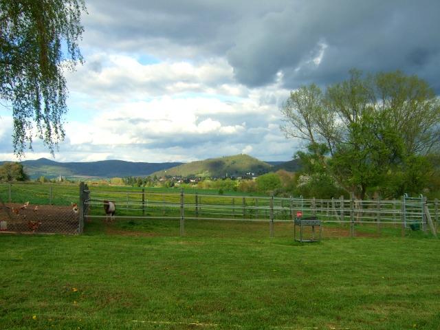 Horsemens_Residence_Paddock