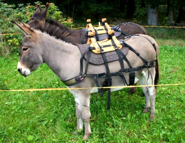 Packsattel-Esel