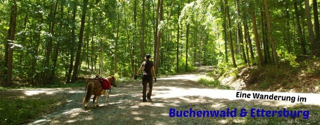 Header-Buchenwald