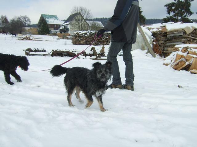 Hund-aus-Rumänien-Tierheim