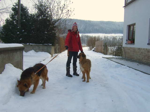 Hund-aus-Rumänien-Tierschutz