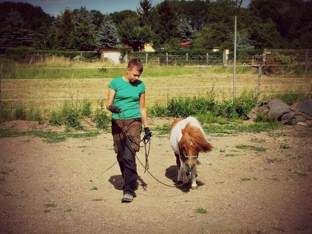 Meditationslehrer-Pferd