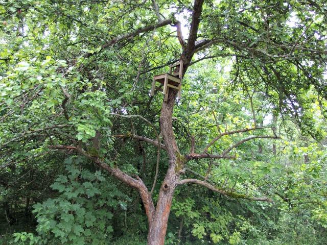 Feensteig Wunschbaum
