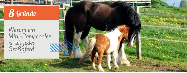 Header Mini-Pony