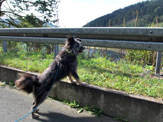 Hund Talsperre Leibis-Lichte