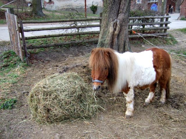 Mini-Pony Futter