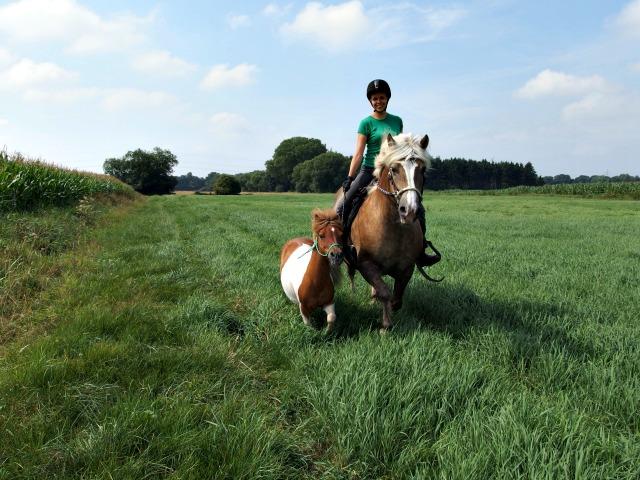 Mini-Pony Handpferd