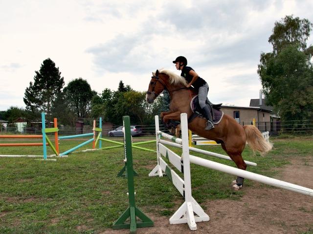 Springen Mini-Pony Großpferd