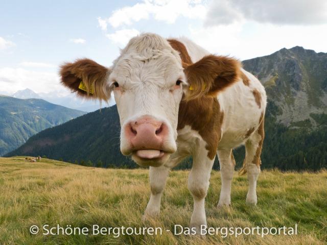 Vorsicht bei Kuhherden