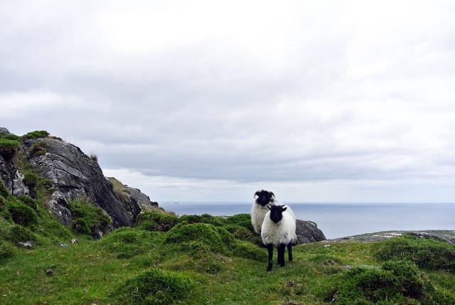 Schafe als Wegweiser