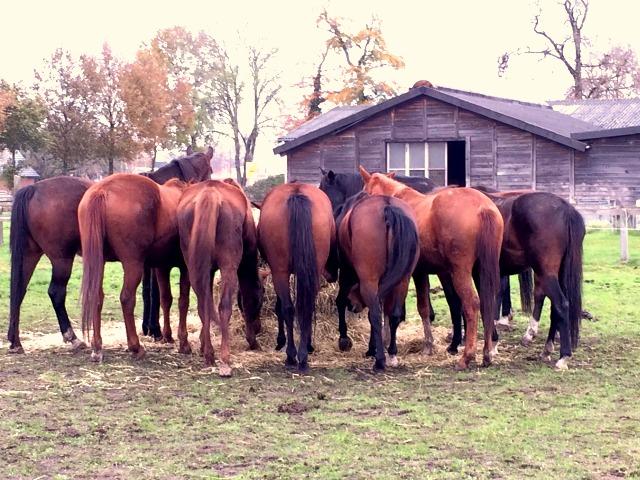 VielePferde