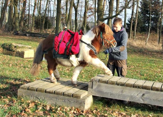 Packtaschen Mini-Pony