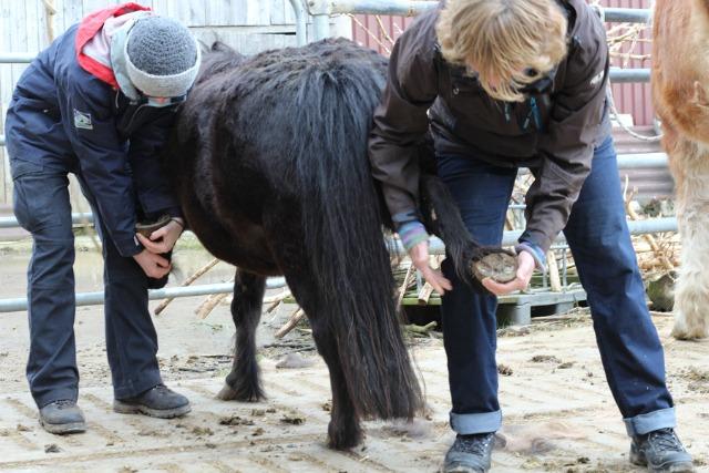 Pferd Hufe geben