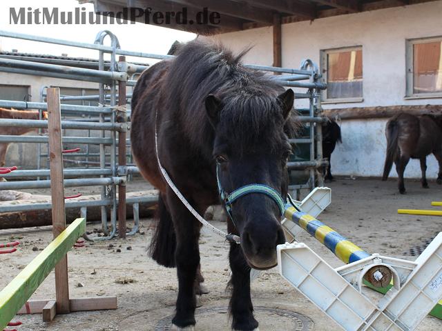 Hindernisgasse Pferd