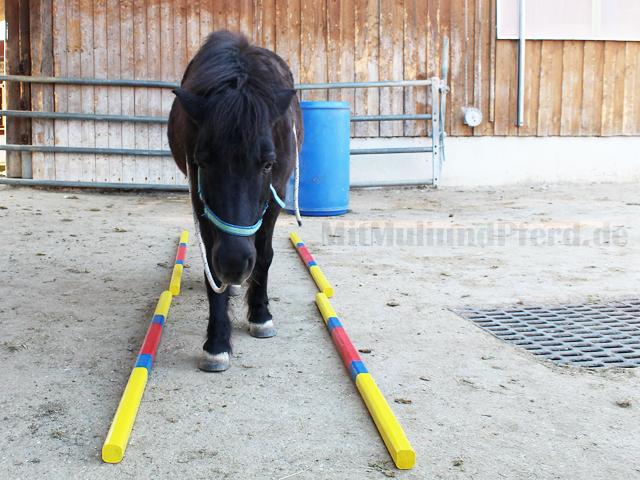 Hindernisgasse Pferde
