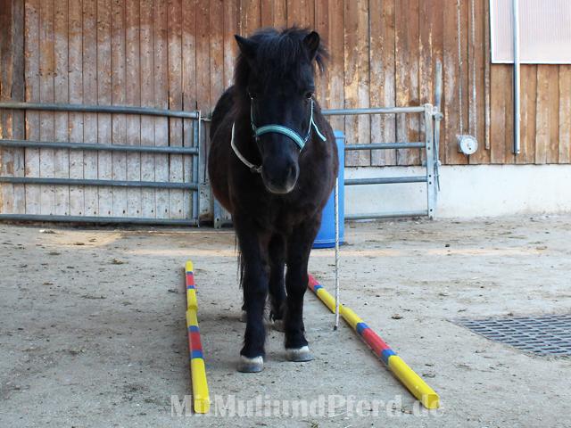 Stangenarbeit Pferd