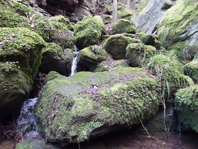 Mullerthal Trail Bach