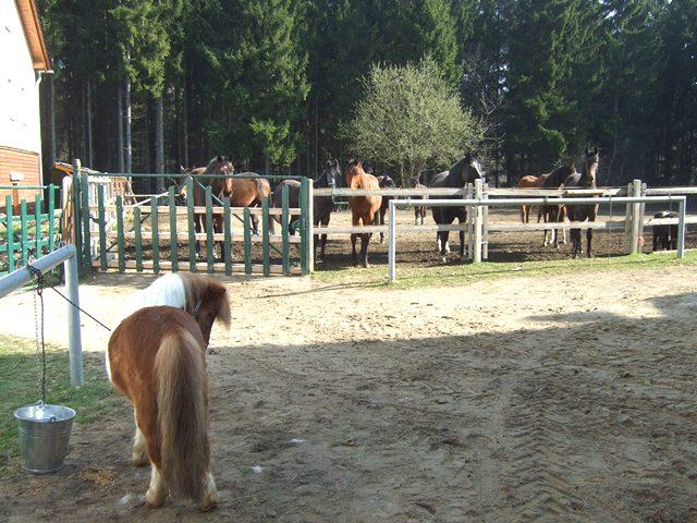 Pferde Unterkunft