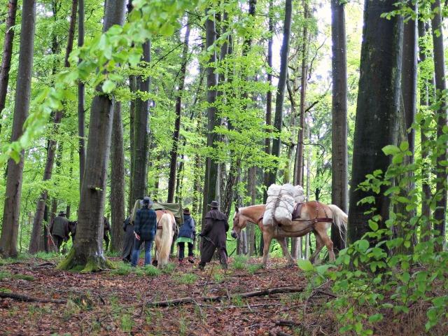 Säumen mit Packpferd im Wald
