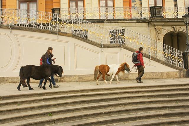 Pony beim Schloss Pillnitz