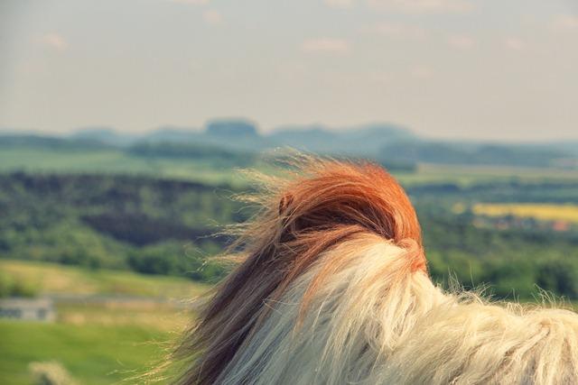 Sächsische Schweiz Pony