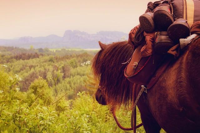Pony in der Sächsischen Schweiz