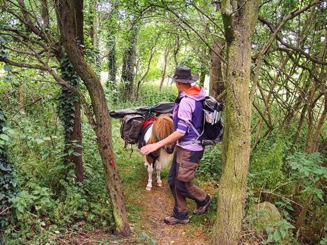 Wandern mit Pony im Fläming