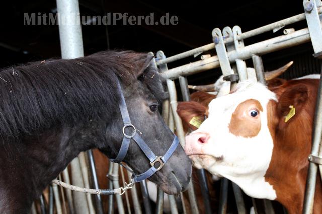 Gina und die Kuh