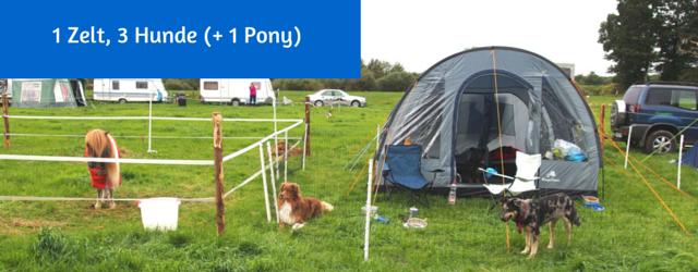 1 Zelt, 3 Hunde (+ 1 Pony)