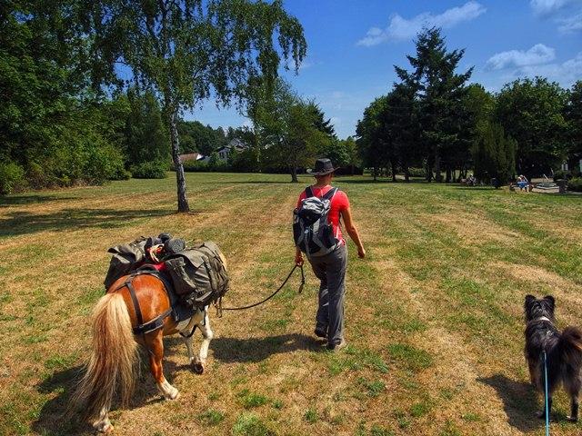 Gladenbach Kurpark mit Pferd