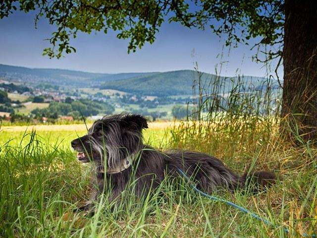 Wndern mit Hund in Hessen