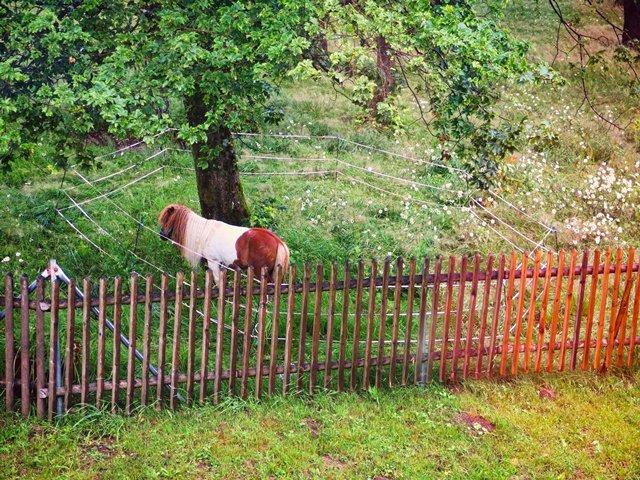 Egon an der Fuchskaute am Westerwaldsteig