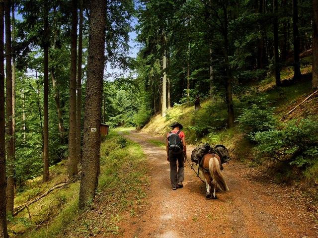 Wandern auf dem Westerwaldsteig