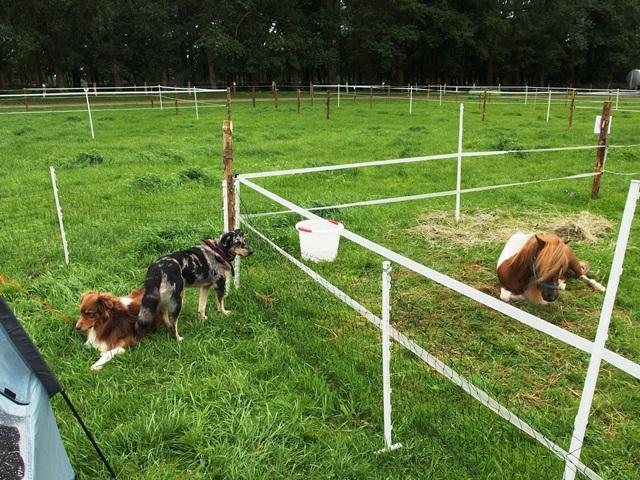 Schafszaun für Hunde