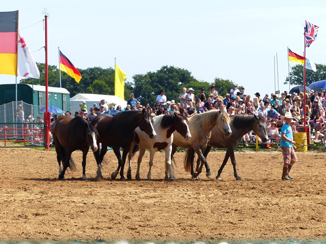 Showact Rodeo