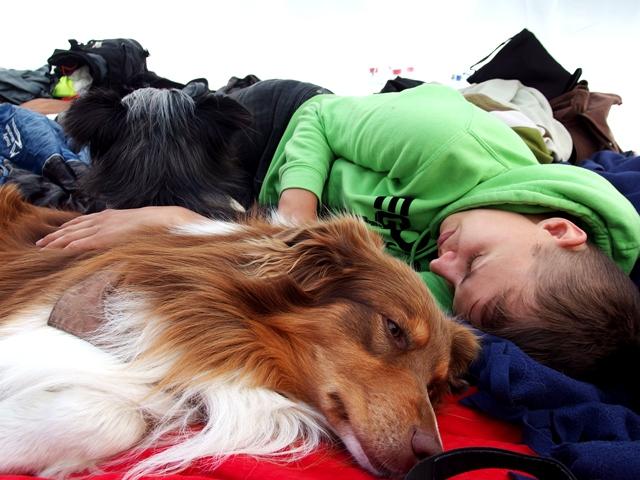 Mit drei Hunden zelten