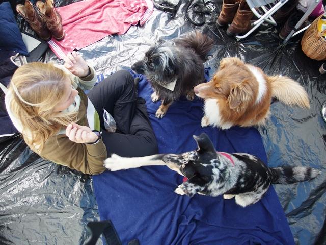 Zelten mit Hund