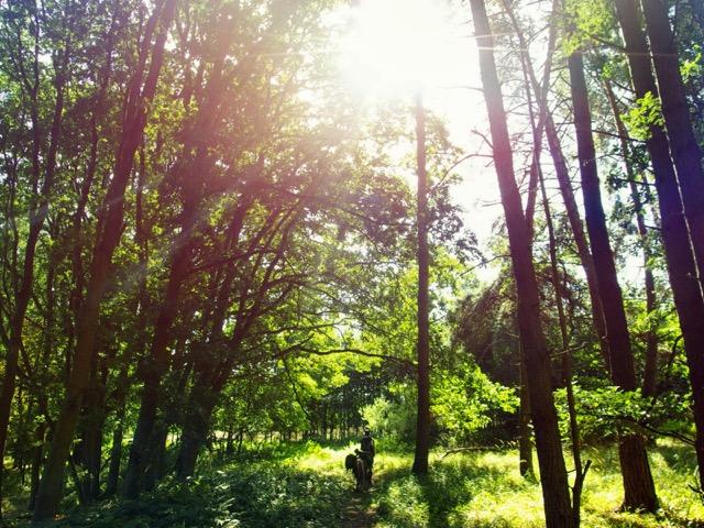 Wandern in der Mecklenburgischen Kleinseenplatte
