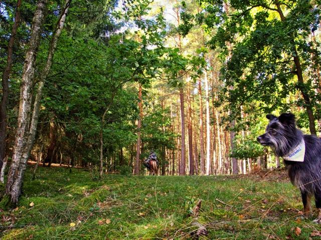 Wandern mit Hund in Mecklenburg