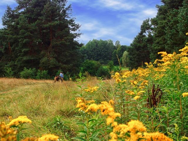 Wandern rund um Priepert in der Mecklenburgischen Kleinseenplatte