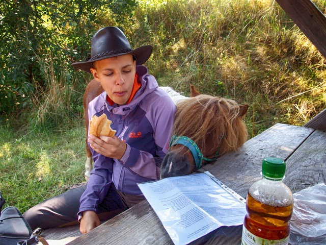 Pause mit Packpony