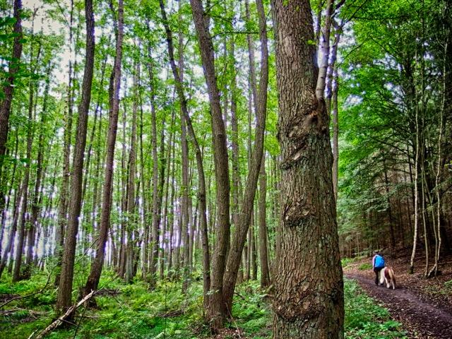 Wandern im Wald in der Mecklenburgischen Kleinseenplatte