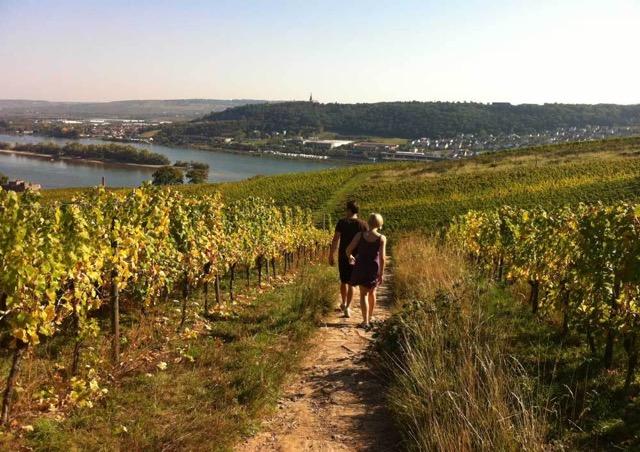 Spaziergang im Rheingau bei Ruedesheim mit Blick auf den Rhein