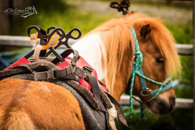 Packsattel Pferd