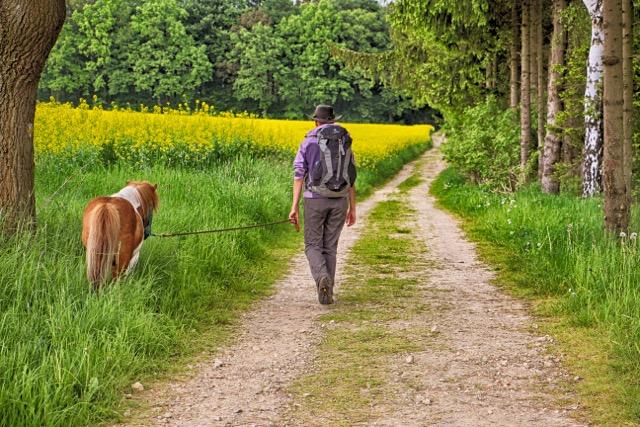 Pferd richtig führen