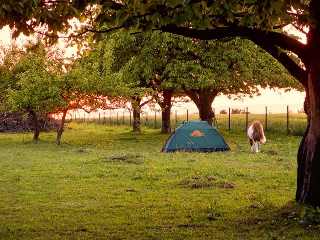 Zelten mit Pferd