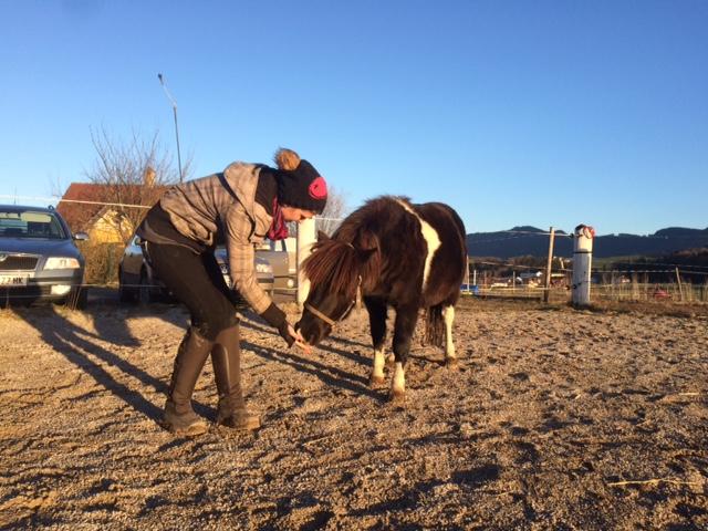 Clickertraining Pony