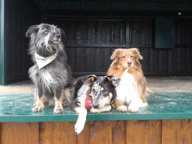Junkern Beel Hunde