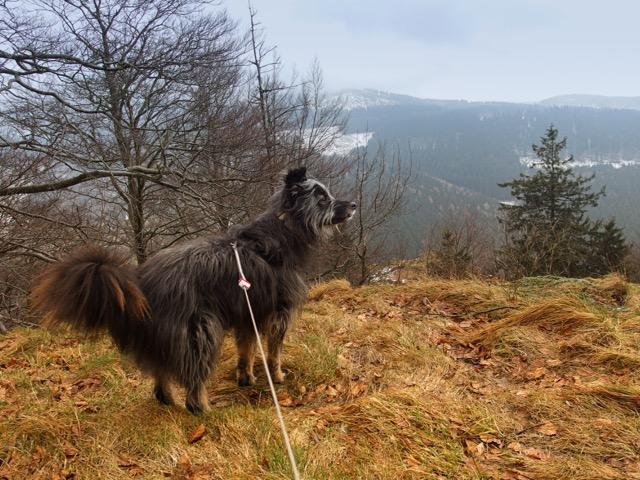 Ausblick vom Haderholzstein